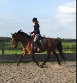 snaffle-trot-pic